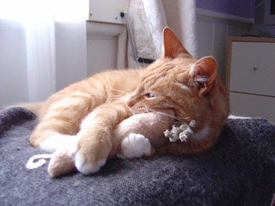 Cat with catnip carrot