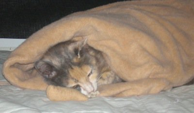 Cat sleeping in Purrfect Pouch