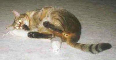 Cat with Catnip Snake